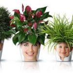 Цветы-обереги для вашего дома