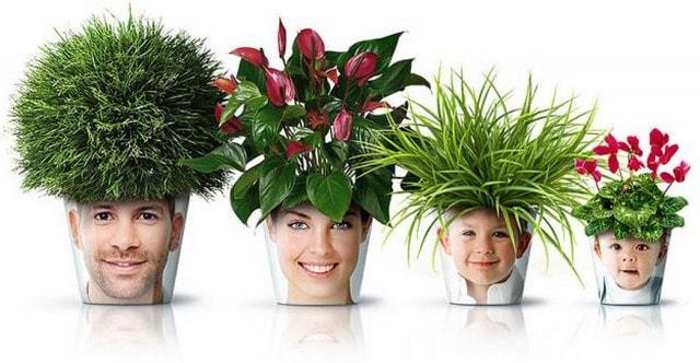 cvety-oberegi-dlja-doma-po-znakam-zodiaka